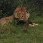 Trip to Kwantu Private Game Reserve + SAA mistake fare to Abu Dhabi business class for R900, dishonoured.